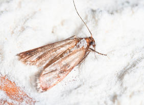 Mr Pesty Moth Control Amp Treatments In Lincoln 01522 899 417